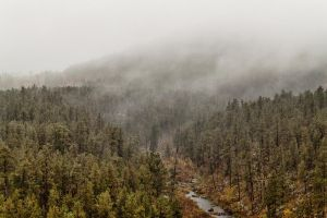 Autumn Fog by CharlieA-Photos