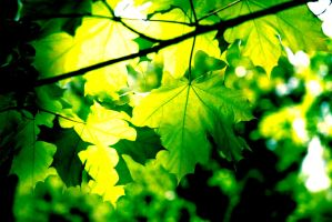 green summer leafs by linedal