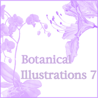 Botanical Illustrations 7 by butnotquite