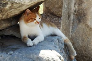 Reclining kitty 2 - Ephesus by wildplaces
