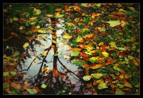 Colours of October by Interna