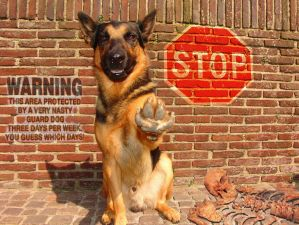 watch for the dog by pegasoft - Stop!!![Warning]