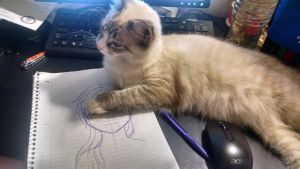 Struggles Of An Artist: Cat by JustASignature