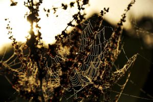 Winter Collection Spiders Web by LW-M-E-D-I-A