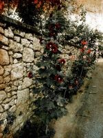 Flowers on a Wall by volpe60610