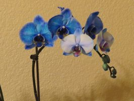 Blue Orchid - Stock 7 by CNLGraphics