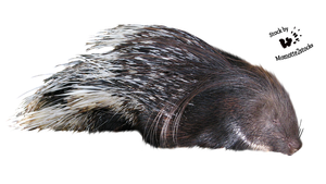 Cut-out stock PNG 101 - tired porcupine by Momotte2stocks
