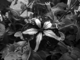Drops of Black and White by Chiseled-Marble