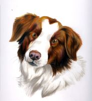 brown border collie by EatToast