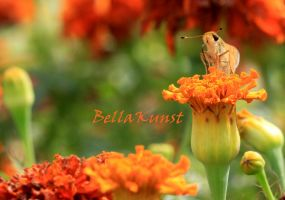 Drink Deep Nature's Nectar by Bella-Kunst