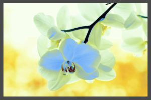 Orchid v2 by simoner