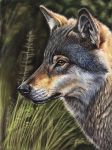 Iberian Wolf by iSaBeL-MR