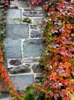 Autumn Wall by blindtetra