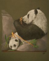 Relaxing Pandas by xfkirsten