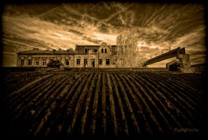 ... a field of rust ...  IR by EYELIGHTZONE