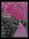 Pink path by PaSt1978