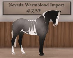 Nevada Warmblood 237 by BRls-love-is-MY-Live