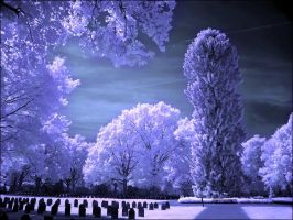 Soldiers Graveyard infrared... by MichiLauke