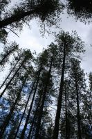 Columbia Falls Forest 16 by Falln-Stock