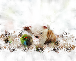 Doggy Wallpaper by fesell