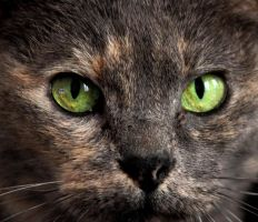 Cat's eyes by Ornicar-photographie