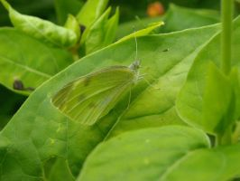 Green Butterfly by emr373