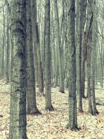 `Forestry by JohnstonColleen