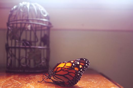 pet butterfly by thisbodyholdingme6