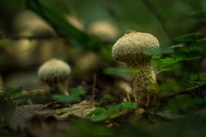 Fluffy Fungus by ChewyFloyd