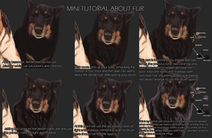 MINI TUTORIAL ABOUT FUR by Angiegsnz