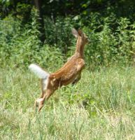 Fawn Flying by Delilah2012