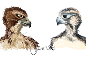 Humanoid hawk and falcon concept art by Dande-Leo