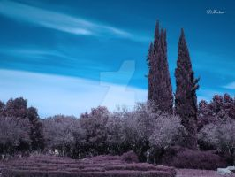 Locked in Nature. Infrared Photo by dmateoscontact