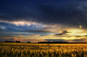 Summer Wheatlands XXI. by realityDream