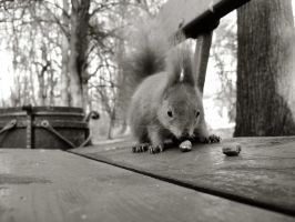 Nuts by vincentgreene