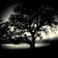 tree 76 by Hengki24