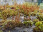 Tiniest  forest ever by Tallon-1