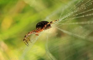 Web crawler by The-Underwriter