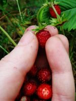 -+-Delicious break-+- by TalviEnkeli