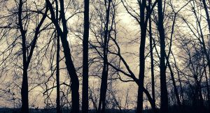 Silhouette Trees by MythologicalWonders