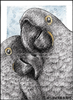 aceo_fuzzymaro_2_by_ladyfromeast-d8r9jrn.png