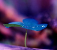 Magical blu flower by Nataly1st