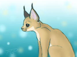 Caracal by Bowtiefoxin
