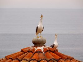 Albatrosses by sirena-pirey
