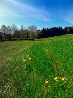 Green grass, flowers and blue sky by patrickjobst