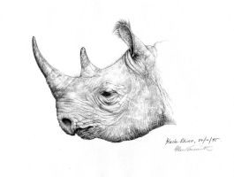 Black Rhino by Lil-el-art
