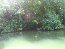 tropical river view 11 by CotyStock