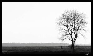 Lonely tree by JVre