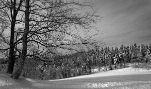 Winter landscape by rejmann
