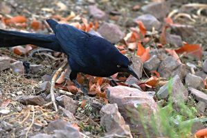 Grackle on the Hunt by Monkeystyle3000